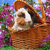 Xavier, ANIMALS, REALISTISCHE TIERE, ANIMALES REALISTICOS, photos+++++,SPCHGUINEA148,#A#, EVERYDAY ,funny