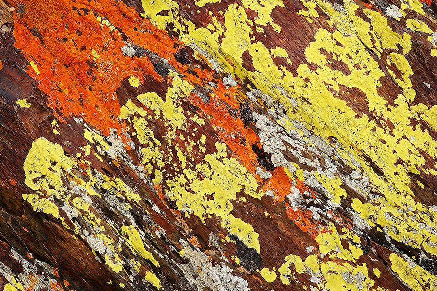 Lichen on rocks, Inyo National Forest, White Mountains, California, USA