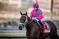 ARCADIA, CA - DECEMBER 26: City of Light #1 with Drayden Van Dyke returns after the Malibu Stakes at Santa Anita Park on December 26, 2017 in Arcadia, California. (Photo by Alex Evers/Eclipse Sportswire/Getty Images)
