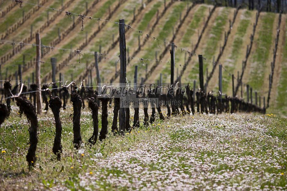 Europe/Europe/France/Midi-Pyrénées/46/Lot/Grézels: Le vignoble du vin de Cahors