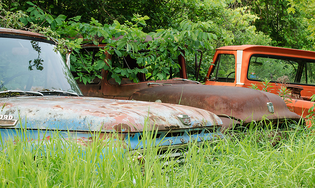 Old trucks are being reclaimed by overgrown foliage, Ellison Bay, Door County,  Wisconsin