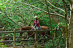 Horse and rider on a wooden bridge in Crescent City California
