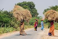 INDIA Uttar Pradesh low caste and dalit women in villages in Bundelkhand / INDIEN Uttar Pradesh, Frauen unterer Kasten und Kastenlose Frauen sind haeufig Opfer von Gewalt in Doerfern in Bundelkhand, Frauen verrichten harte koerperliche Arbeit