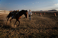 Training for a competition, a young headstrong wild horse learns to read cues from a patient trainer. <br />