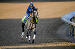 LOUISVILLE, KENTUCKY - APRIL 27: Tacitus, trained by William Mott, exercises in preparation for the Kentucky Derby at Churchill Downs in Louisville, Kentucky on April 27, 2019. John Voorhees/Eclipse Sportswire/CSM