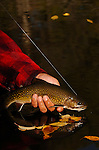 Brook Trout Vertical