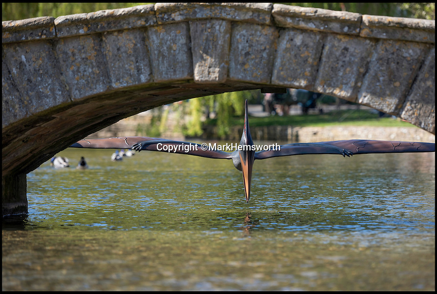 BNPS.co.uk (01202 558833)<br /> Pic: MarkHemsworth/BNPS<br /> <br /> A dinosaur souring under a bridge in Bourton-on-the-Water.<br /> <br /> The move is part of a new installation to Birdland.<br /> <br /> Visitors to one of Britain's oldest villages are used to seeing historic sights but many couldn't believe their eyes when a herd of life-sized dinosaurs descended on the picturesque settlement.<br /> <br /> The group of model dinosaurs made a startling sight as they made their way through Bourton-on-the-Water in Gloucestershire while on their way to the nearby Birdland attraction where they will form part of a new display.<br /> <br /> Some people looked on curiously as a velociraptor crossed the village's historic stone bridge while a cearadactylus in the River Windrush also caused some bemusement.
