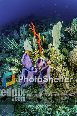 12 June 2014: Sponges and Coral are seen near the wall and reef at Hammerhead Hill, on the North Shore of Grand Cayman Island. Located in the British West Indies in the Caribbean, the Cayman Islands are renowned for excellent scuba diving, snorkeling, beaches and banking.  Mandatory Credit: Ed Wolfstein Photo *** RAW (NEF) Image File Available ***