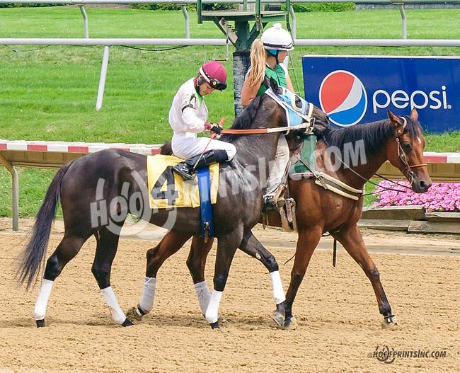 Goldland at Delaware Park on 7/6/15