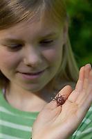 """Vierfleck-Kreuzspinne, Vierfleckkreuzspinne, Mädchen, Kind mit Spinne auf der Hand, """"Keine Angst vor Spinnen!"""", Weibchen, Kreuzspinne, Araneus quadratus, fourspotted orbweaver, Araneidae, Radnetzspinnen, Kreuzspinnen, orbweavers, orb-weaving spiders"""
