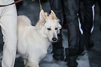SÃO PAULO,SP, 23.10.2015 - FASHION-WEEK - Modelo desfila com cachorro na grife Ratier na São Paulo Fashion Week Inverno 2016, no prédio da Bienal do Parque Ibirapuera, zona sul de São Paulo, nesta sexta-feira (23). (Foto: William Volcov/Brazil Photo Press)