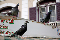 Three pigeons perching on a run down shop rooftop, Gibraltar, France.