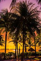 Palm trees, Four Seasons Resort Bora Bora, Motu Tehotu, Bora Bora, French Polynesia.
