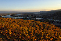 Europe/France/Rhône-Alpes/26/Drôme/Tain-l'Hermitage : Vignoble côtes du Rhône
