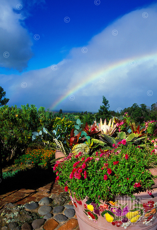 A rainbow over a garden with protea and other foliage in the upcountry community of Kula at a 3,000-ft. elevation.