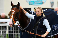 Bullingdon with stable Lass in the winners enclosure during Afternoon Racing at Salisbury Racecourse on 7th August 2017