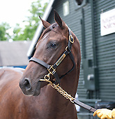 Tepin, 2012 Saratoga Select Sale, HIP 023