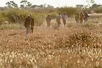 San Bushmen, Kalahari Desert, Botswana