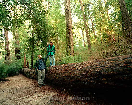 Trent Nelson, Noah Nelson, and Laura Nelson  at the Big Basin redwoods state park.<br />