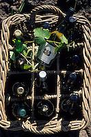 Océanie/Australie/Australie Méridionale/Clare Valley : Vins de Sevenhill Cellars