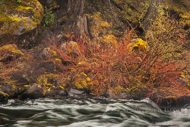 McCloud River, Shasta - Trinity National Forest, Siskiyou County, California