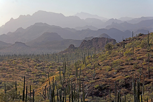 Cactus and smoky mountains make up the landscape in Baja California, Mexico