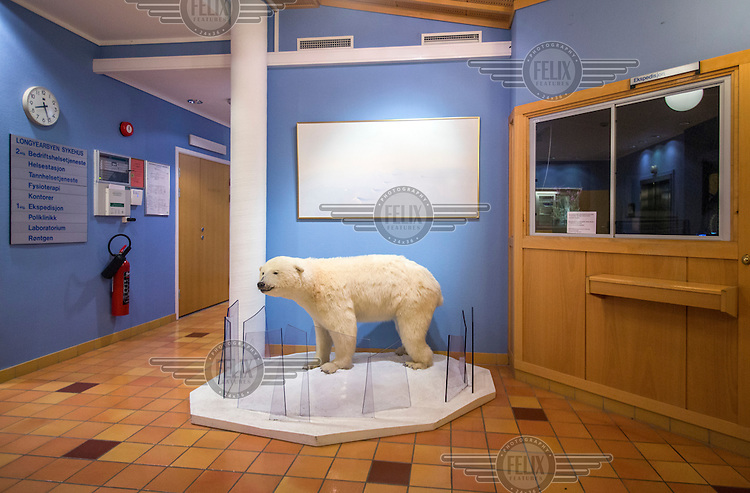A polar bear cup on display in the Svalbard hospital. <br /> <br /> Norway's polar bear population lives in and around Svalbard. Any global warming will affect the around 3000 polar bears in the area. <br /> <br /> <br /> Svalbard (formerly known by its Dutch name Spitsbergen) is a Norwegian archipelago in the Arctic Ocean. Situated north of mainland Europe, it is about midway between continental Norway and the North Pole. <br /> <br /> <br /> (photo: Fredrik Naumann/Felix Features)