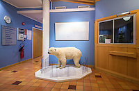 A polar bear cup on display in the Svalbard hospital. <br /> <br /> Norway&rsquo;s polar bear population lives in and around Svalbard. Any global warming will affect the around 3000 polar bears in the area. <br /> <br /> <br /> Svalbard (formerly known by its Dutch name Spitsbergen) is a Norwegian archipelago in the Arctic Ocean. Situated north of mainland Europe, it is about midway between continental Norway and the North Pole. <br /> <br /> <br /> (photo: Fredrik Naumann/Felix Features)