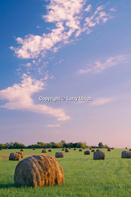 Rolled hay<br /> Farm near Plad<br /> Dallas County<br /> Missouri
