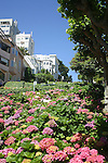 Plants, flowers & trees line Lombard Street,aka, the most crooked street in San Francisco.<br />