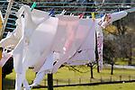 Clothes on line to dry, Wäsche auf Wäscheleine zum Trocknen, Mauren, Liechtenstein