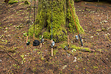 USA, Oregon, Santiam River, Brown Cannon, fishing poles rested against a tree in the campground