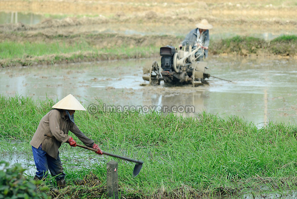 Asia, Vietnam, Hue. Vietnamese farmers working in the field.