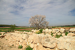 Israel, Tel Batash in the Shephelah, remains of the wall of the Biblical city Timnah