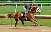 RB Djustify winning at Delaware Park racetrack on 6/9/14