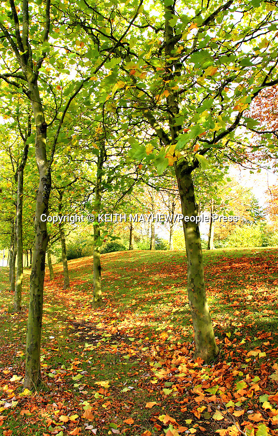 Autumn Colours and scenery in and around Milton Keynes, Buckinghamshire, England - October 19th 2013<br /><br />Photo by Keith Mayhew