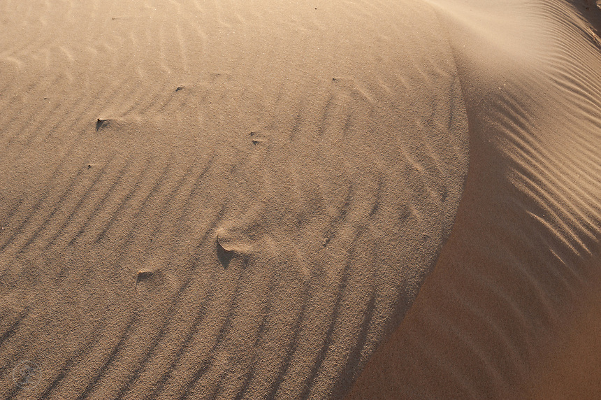 Ripples caused by the wind on sand reveal shells in the dunes.