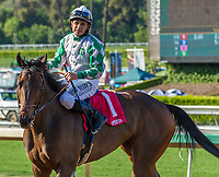 ARCADIA, CA APRIL 8:  #1 Sircat Sally ridden by Mike Smith return to the connections after winning the Providencia Stakes (Grade lll) on April 8, 2017 at Santa Anita Park in Arcadia, CA. (Photo by Casey Phillips/Eclipse Sportswire/Getty Images)