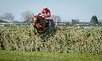 LIVERPOOL - APRIL 14: Tiger Roll #13, ridden by Davy Russell, jumps the final fence alone in front on his way to winning the Randox Health Grand National Steeplechase at Aintree Racecourse in Liverpool, UK (Photo by Sophie Shore/Eclipse Sportswire/Getty Images)