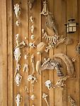 Collection of animal bones, skulls, shells, jaws, feathers, bird, vertebrae.