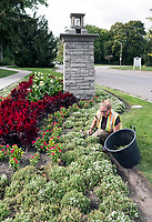 Here today gone by now. Janet Laidlaw a City of Sarnia seasonal worker picks weeds from the floral garden at the entrance of Canatara Park. She was weeding to make the garden attractive for Thanksgiving weekend. One of her last chores this season is pulling the flowers next week.