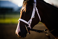 BALTIMORE, MD - MAY 18: Classic Empire on track for training in preparation for the Preakness Stakes at Pimlico Race Course on May 18, 2017 in Baltimore, Maryland.(Photo by Douglas DeFelice/Eclipse Sportswire/Getty Images)