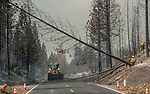 Cal Trans workers fall trees to make Highway 120 Safe near Yosemite National Park.