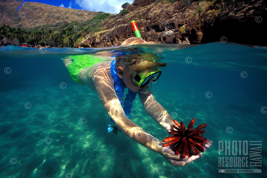 A young boy (age 8) discovers a Red Pencil Sea Urchin in Hanauma Bay,a snorkelers paradise and marine park.