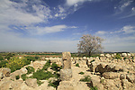Tel Batash, site of the biblical city Timnah