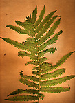 A green fern on an orange background