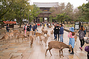 Deer and tourists in front of Nandaimon Gate, leading to Todaiji Temple.