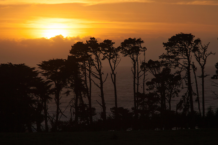 Coastal Cypress trees form a graphic silhouette against the setting sun on the Big Sur Hwy 1.