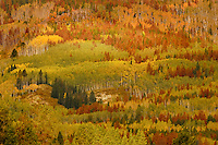 Beetle killed pines contribute to an abstractcollage of color in northern Routt county, Colorado.