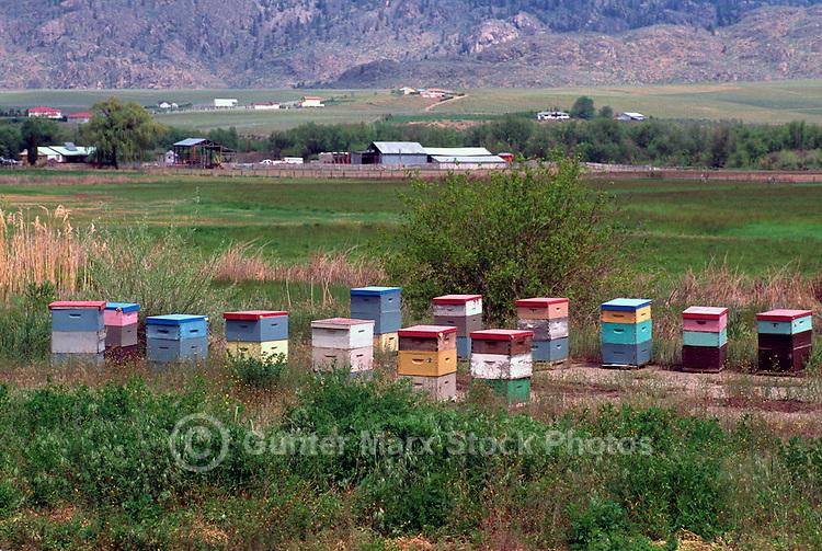 Beehives on Field, South Okanagan Valley, BC, British Columbia, Canada - Beekeeping